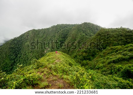 Mountain and Rainforest