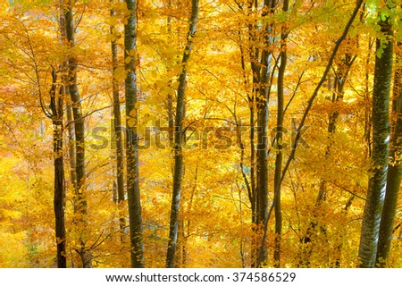 Mountain autumn background with colorful trees. Horizontal view of autumn leaves in a sunny day.