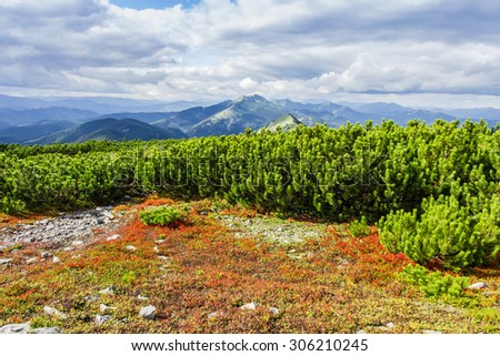 Mountain autumn landscape with low-growing shrubs of bilberries with red leaves and thickets of mountain pine in the foreground, mountain ranges and peaks and sky with clouds - stock photo