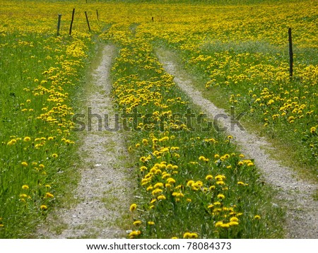 Mountain Bike and Cycle path through the flower field - stock photo