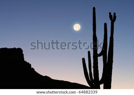 Mountain, Cactus and Moon - stock photo