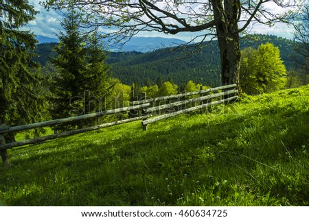 Mountain chain in The Carpathians (Ukraine). Mountain forest. Beautiful mountain forest landscape. Mountain forest before storm. Amazing mountain forest. Green mountain forest in clouds.