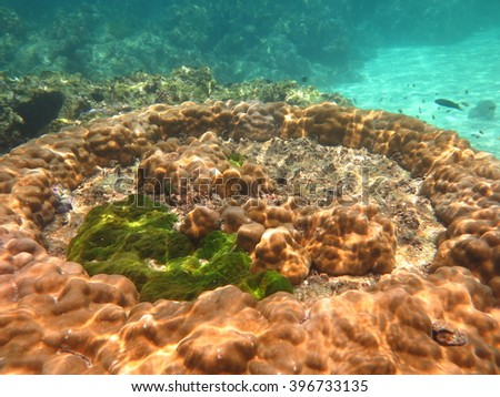 Mountain corals under the blue sea at Andaman Sea Thailand.stony corals.