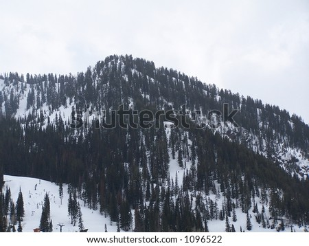 Mountain covered with trees and snow