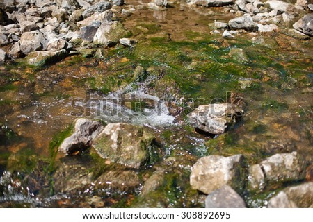 Mountain creek in summer siberian forest - stock photo