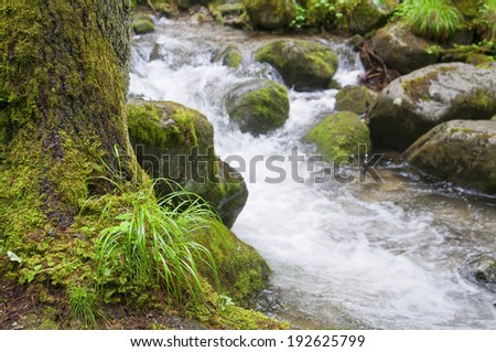 Mountain creek with rocks and small grass in the front