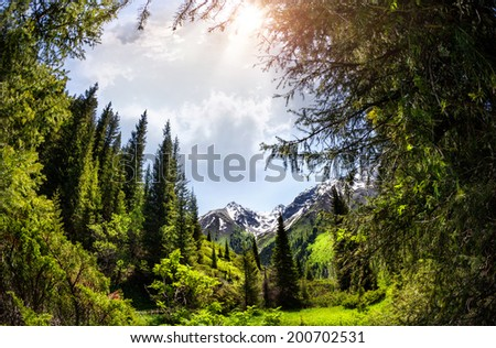 Mountain Fir forest in Dzungarian Alatau, Kazakhstan, Central Asia