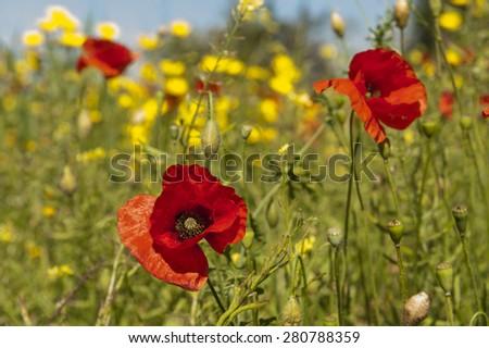 Mountain flower - stock photo