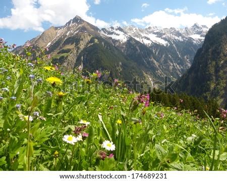 Mountain flower meadow - stock photo