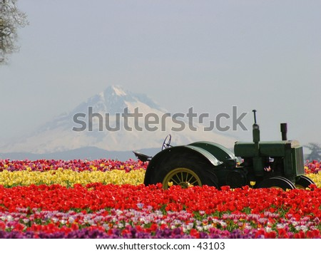 Mountain, Flowers and Tractor
