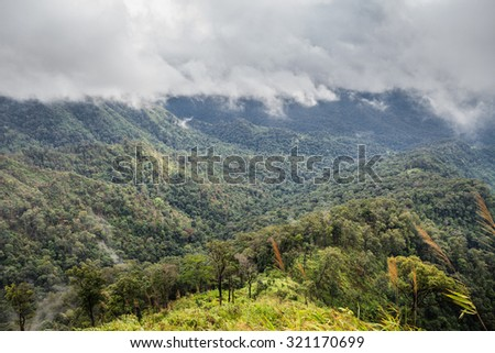 mountain forest and raining fog