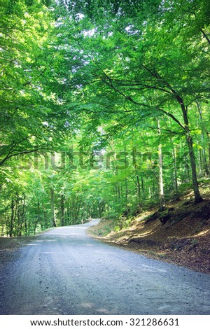 Mountain forest road - stock photo