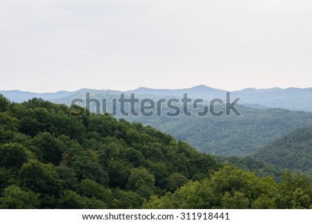 Mountain forest trees