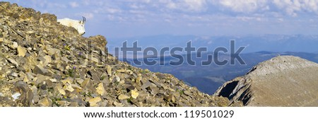 Mountain Goat on a Ridge - stock photo