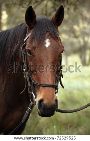 mountain horse in the lush bushland
