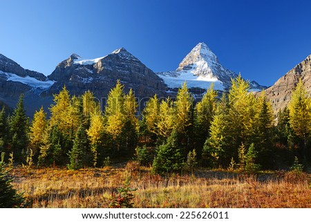 Mountain in Canadian Rockies with blue sky in Autumn with yellow trees - stock photo