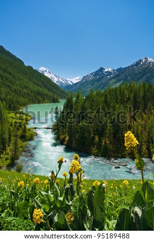 Mountain lake Kucherlinskoe with the yellow flowers on foreground, Altai, Russia - stock photo