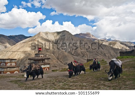 Mountain landscape and caravan of yaks in Inner Dolpo, Nepal - stock photo