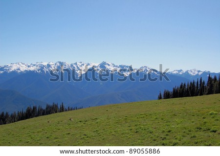 Mountain Landscape and Meadows at Hurricane Ridge, Olympic National Park - stock photo