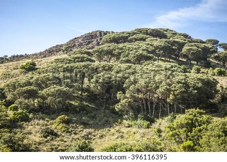 Mountain landscape Cima del Monte near Rio nell Elba, Elba, Tuscany, Italy, Europe - stock photo