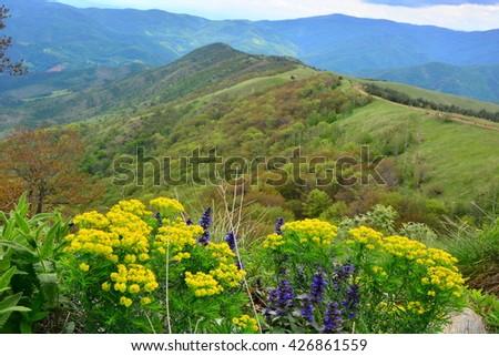 mountain landscape flowers  - stock photo