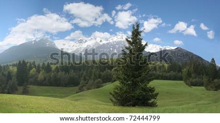 Mountain Landscape - Green Fir Forest - stock photo