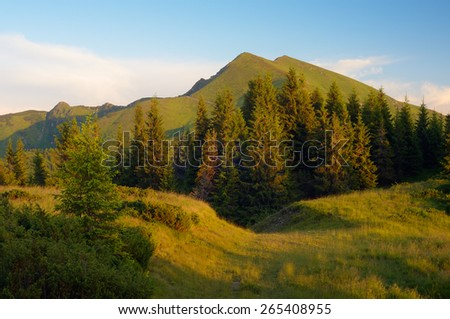Mountain landscape in the evening. Spruce forest on the slopes. Road in the mountains - stock photo