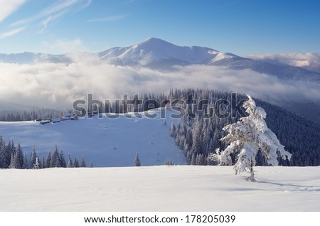 Mountain landscape on a sunny afternoon in the mountains. Mountain village in the mountains, Carpathians, Ukraine, Europe.