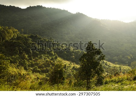 mountain landscape pine trees near valley and colorful forest on hillside