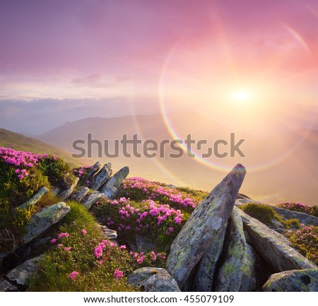 Mountain landscape. Pink flowers in the meadow and beautiful stones. Wonderful sunrise with fog and rainbow. Blooming rhododendron. Art processing of photos. Color toning, collage - stock photo
