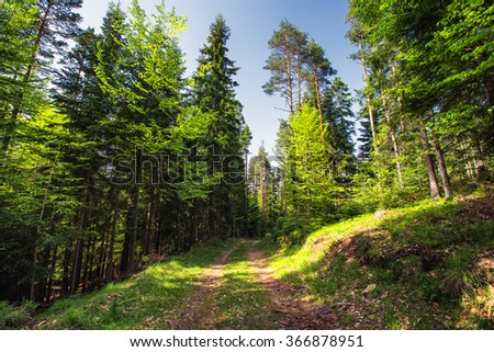 Mountain landscape, trail and green grass in the forest. Bulgaria, Europe - stock photo