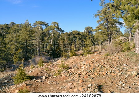 Mountain landscape. Troodos. Cyprus