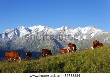 mountain landscape with cows - stock photo