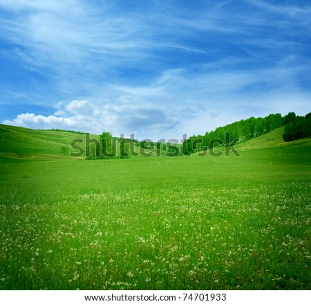 Mountain landscape with flowers field - stock photo