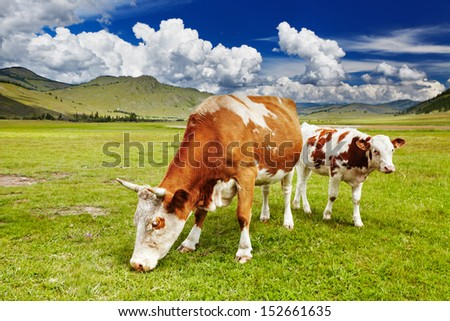 Mountain landscape with grazing cows - stock photo