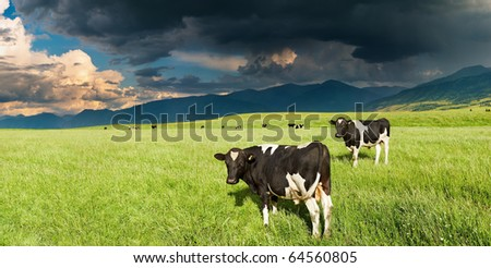Mountain landscape with grazing cows and storm clouds - stock photo
