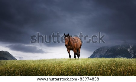 Mountain landscape with grazing horse - stock photo
