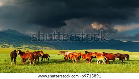 Mountain landscape with grazing horses and storm clouds - stock photo