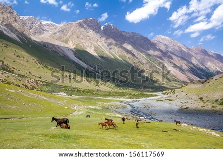 Mountain landscape with group of pasturing horses - stock photo