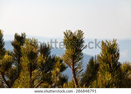 Mountain landscape with pine trees in Zakopane - stock photo