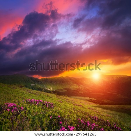Mountain landscape with pink rhododendron flowers. Dramatic sunset sky over Carpathian hills