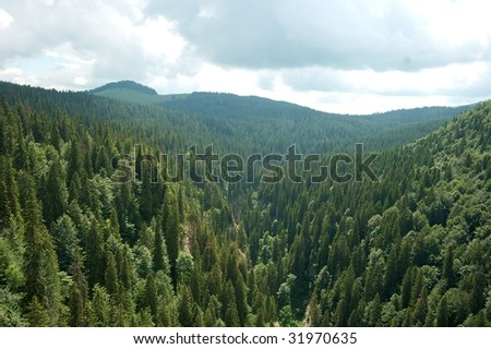 Mountain landscape with vast pine forests - stock photo