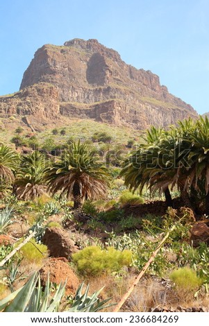 mountain landscapes of gorges maska, Canary Islands  - stock photo