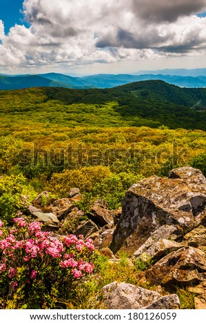 Mountain laurel and view of the Appalachians on Stony Man Mountain, in Shenandoah National Park, Virginia. - stock photo