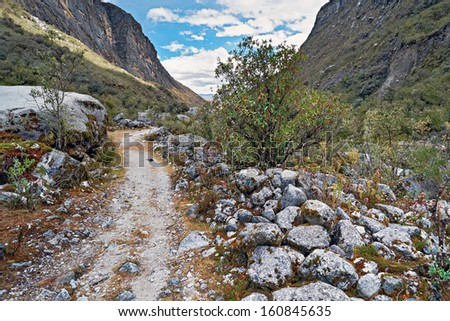 Mountain lupins below Churup in the Andes, Cojup Valley in Peru, South America