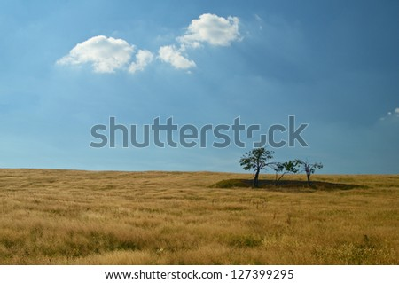 Mountain meadow, golden grass, isolated trees, an island in the grass, backlit glowing cloud - stock photo