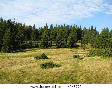 mountain meadow in carpathians - stock photo