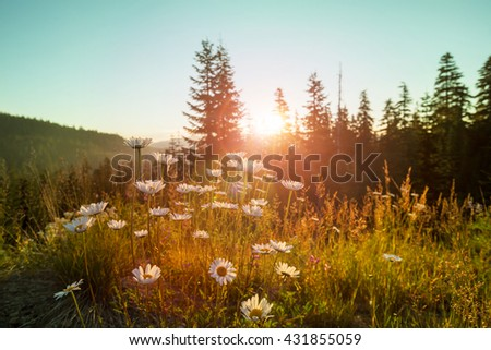 Mountain meadow in sunny day. Instagram filter. - stock photo
