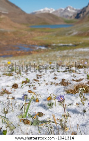 Mountain meadow in the morning after heavy snow - stock photo