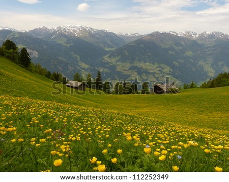 Mountain meadow in yellow and green - stock photo